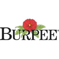 Burpee coupons