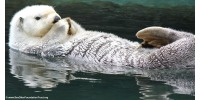 Save Sea Otters From Cosmetic Trash