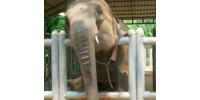 Take Good Care of Sick Elephants